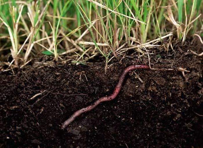 Как выращивать дождевых червей в промышленных масштабах?