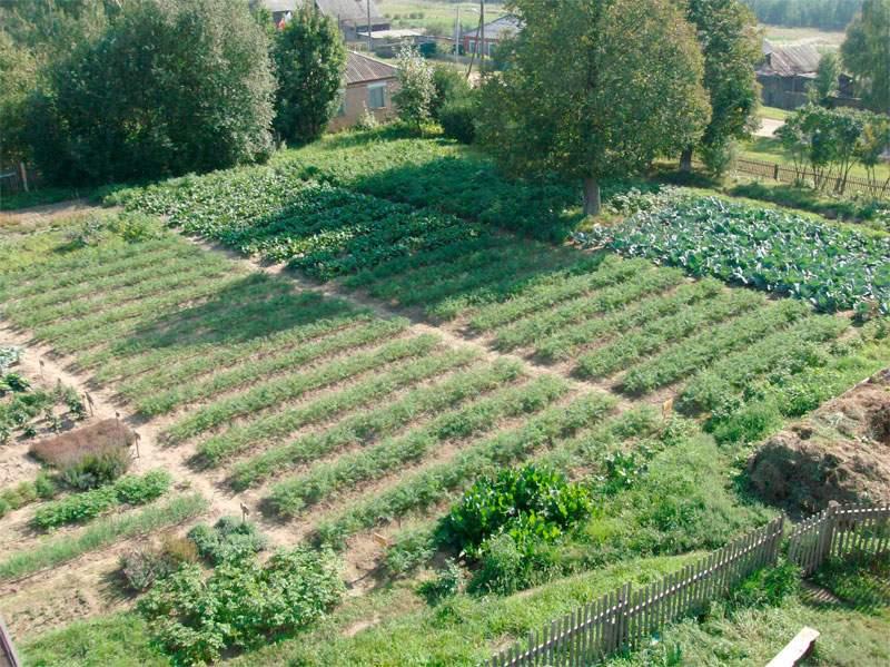 как взять кредит под сельское хозяйство